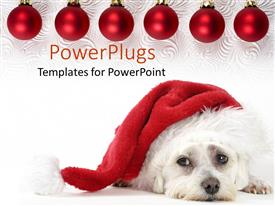 PowerPlugs: PowerPoint template with pooch wearing Santa hat on decorated background with ornaments