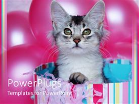 PowerPoint template displaying pretty ash colored cat in a multi colored shopping bag