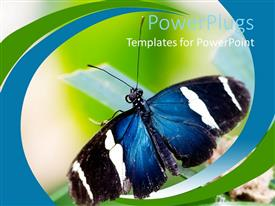PowerPoint template displaying pretty black and white butterfly in its natural background