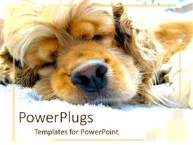 PowerPlugs: PowerPoint template with puppy sleeping in sunshine on white blanket,