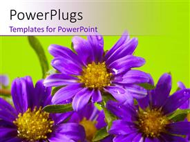 PowerPlugs: PowerPoint template with purple flowers blossom together with green color
