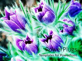 PowerPlugs: PowerPoint template with purple flowers with greenery in the background