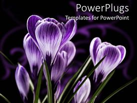 PowerPlugs: PowerPoint template with purple flowers with streaks of green grass on a black background