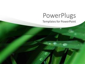PowerPoint template displaying rain water drops on green leaves and white background