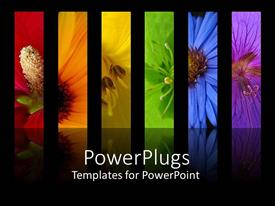 PowerPlugs: PowerPoint template with rainbow of flowers collage including red orange yellow green blue and purple