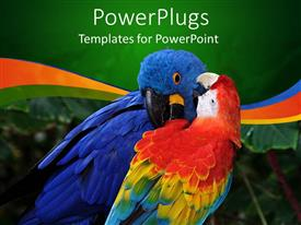 PowerPoint template displaying rainbow macaw and blue parrot cleaning feathers, green border, rainbow waves
