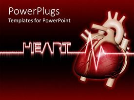 PowerPoint template displaying real human heart with heartbeat, Heart written in cool text