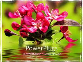 PowerPlugs: PowerPoint template with red Apple blooms with reflection on water surface