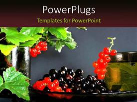 PowerPlugs: PowerPoint template with red and black currants with leaves on Grey background