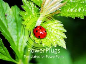 PowerPlugs: PowerPoint template with red and black lady bird on a green leaf