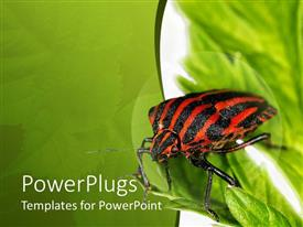 PowerPoint template displaying red and black striped insect on green leaves with green background