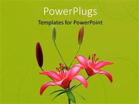 PowerPlugs: PowerPoint template with red color lily blossom with green color