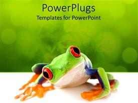 PowerPoint template displaying a red eyes frog looking into camera with the green background