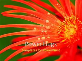 PowerPlugs: PowerPoint template with a red flower with water droplets and greenish background