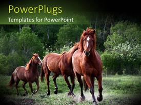 PowerPlugs: PowerPoint template with red horses running in green nature