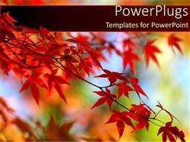 PowerPlugs: PowerPoint template with red leaves on orange tree in Autumn with a blue sky