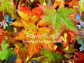 PowerPoint template displaying red, orange, and green autumn leaves