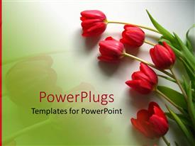 PowerPoint template displaying red tulips with green leaves on light gradient green background and red line on the left side
