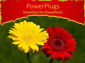PowerPlugs: PowerPoint template with a red and yellow flower with green background