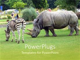 PowerPoint template displaying a rhino along with a zebra