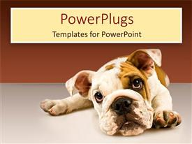 PowerPlugs: PowerPoint template with sad puppy eyes dog face on gray ground and gradient brown background