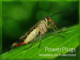 PowerPoint template displaying a scorpionfly on a leaf with greenery in the background