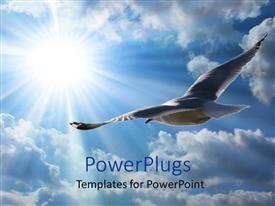 PowerPlugs: PowerPoint template with seagull soaring high through the clouds and beam of sun