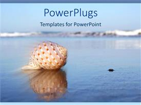 PowerPlugs: PowerPoint template with seashell on water with reflection in sea