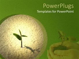 PowerPoint template displaying seedling sprouting in sand, hands holding young plant