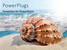 PowerPoint template displaying a shell on the beach with sea in the background