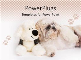 PowerPoint template displaying shih-Tzu dog sitting next to a stuffed dog surrounded by dog paws