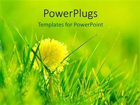 PowerPlugs: PowerPoint template with shining dandelion growing in fresh flourishing grass during spring season