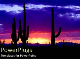 PowerPoint template displaying silhouette of cacti cactus at night in desert with sunset pink blue