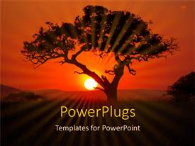 PowerPlugs: PowerPoint template with silhouette of tree at sunset in Africa