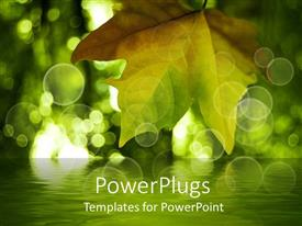 PowerPlugs: PowerPoint template with single leaf over a lake on a green background