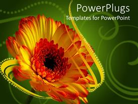 PowerPlugs: PowerPoint template with single red and yellow Gerber daisy on green background with gold ribbon