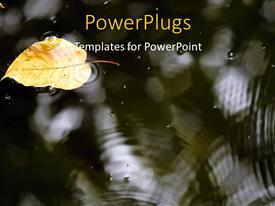 PowerPlugs: PowerPoint template with dry leaf floating on surface of water with water ripples