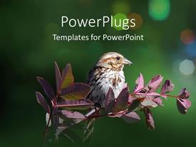PPT theme featuring small bird on a purple branch on a green background