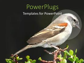 PowerPlugs: PowerPoint template with a small brown bird perching on a tree branch