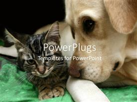 PowerPlugs: PowerPoint template with small brown kitten with Labrador retriever dog living together