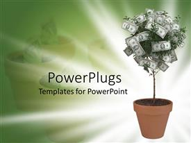 PowerPlugs: PowerPoint template with small money tree in terra cotta pot  on green and white background