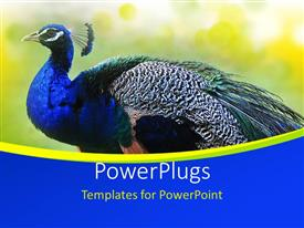 PowerPlugs: PowerPoint template with beautiful Peacock on abstract yellow  background