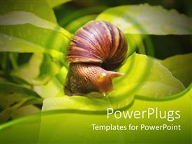 PowerPlugs: PowerPoint template with a snail n a leaf with a number of leaves in the background