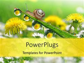 PowerPlugs: PowerPoint template with a snail with a number of flowers in the background