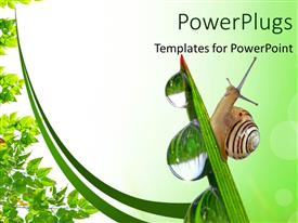 PowerPlugs: PowerPoint template with a snail on a plant with water drops on the plant