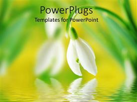 PowerPlugs: PowerPoint template with snow drop bent face down to a calm lake surface