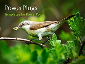 PowerPlugs: PowerPoint template with a sparrow on the branch of a tree with greenery in background