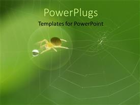 PowerPlugs: PowerPoint template with a spider with a water droplet and a web