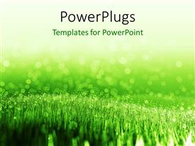 PowerPoint template displaying spring background with green summer grass and water droplets