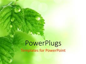 PowerPlugs: PowerPoint template with a lot of leaves with blurr background